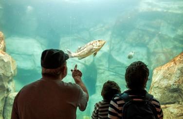 4 Cleveland Aquarium 805 x 453